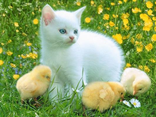 cat-and-chick