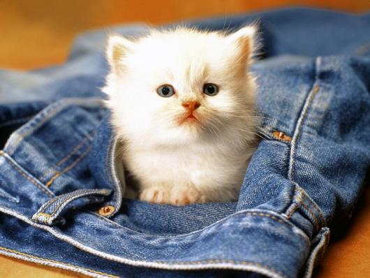 cat-jeans