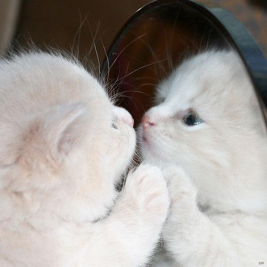 cat-mirror
