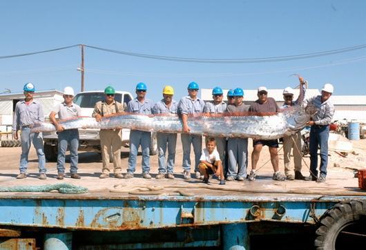 Oarfish, Ikan Ular Laut Kuno [ www.BlogApaAja.com ]
