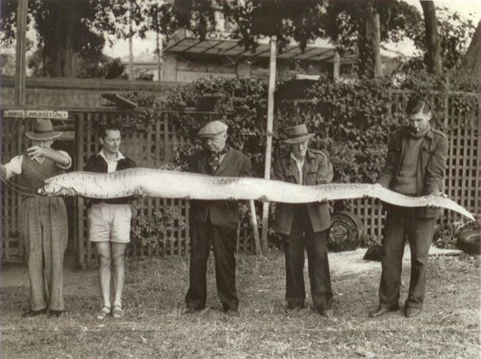 The post Oarfish – The Sea Serpent of Ancient Times appeared first ...
