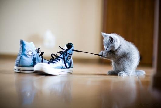 shoe-cat