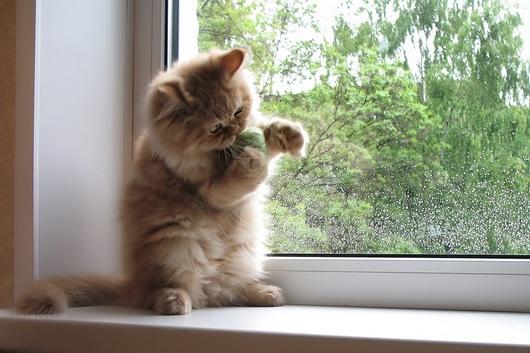 wool-cat