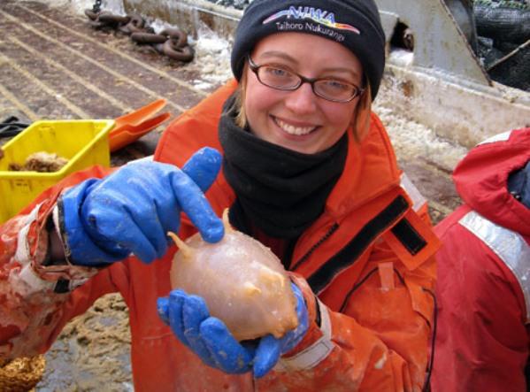 10 animales desconocidos encontrados en la Antártida