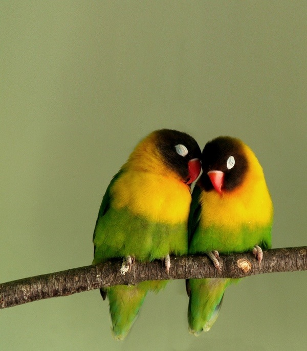essay on love for animals and birds