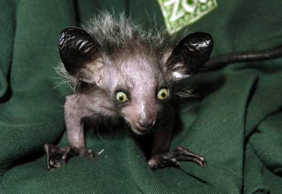 9 Most Scary and Horrible Looking but Harmless Animals ...