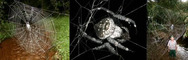 darwin_bark_spider