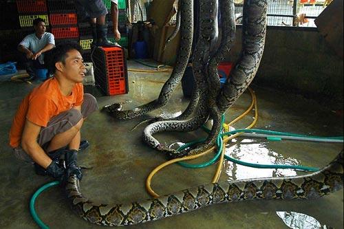 python-skin-air