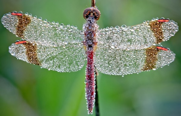 dew on insects photography