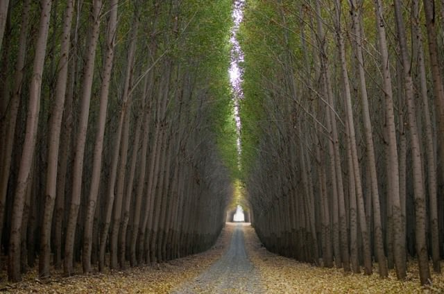 boardman-tree-farm