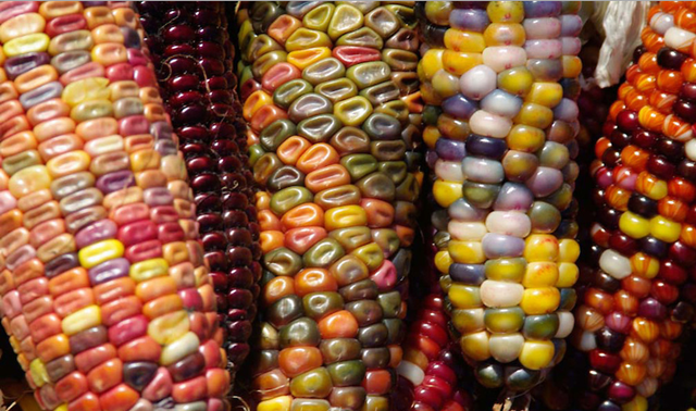 colorful glass corns