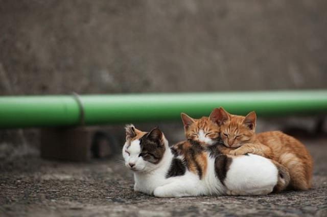 Cat Island 10
