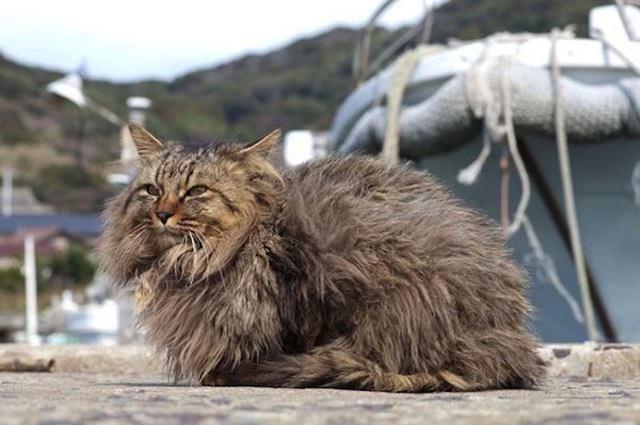 Cat Island 11