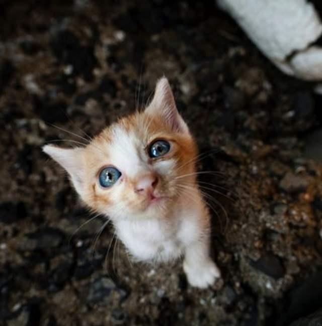 Cat Island 9