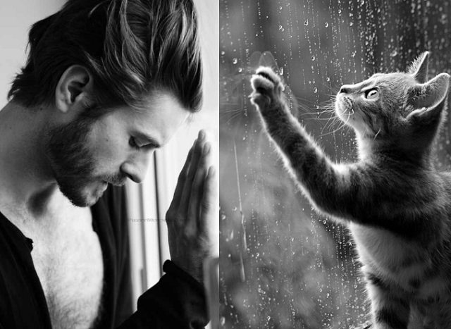 Sexy Guy or Cat (1)