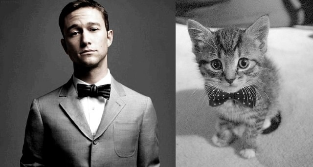 Sexy Guy or Cat (4)