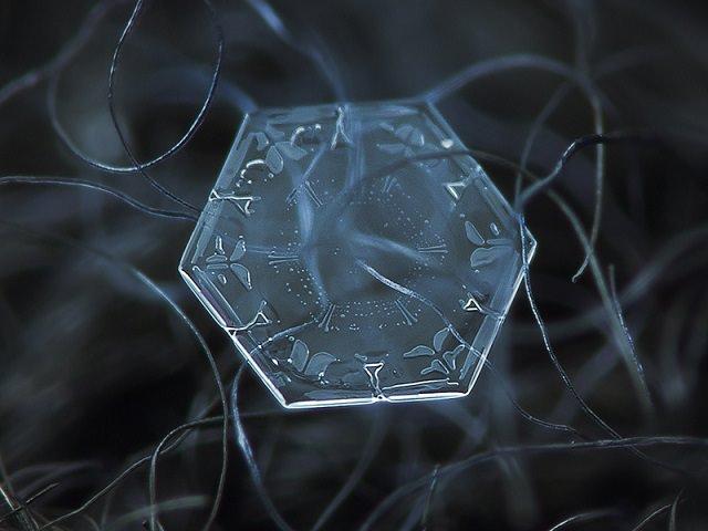 Snowflakes (11)