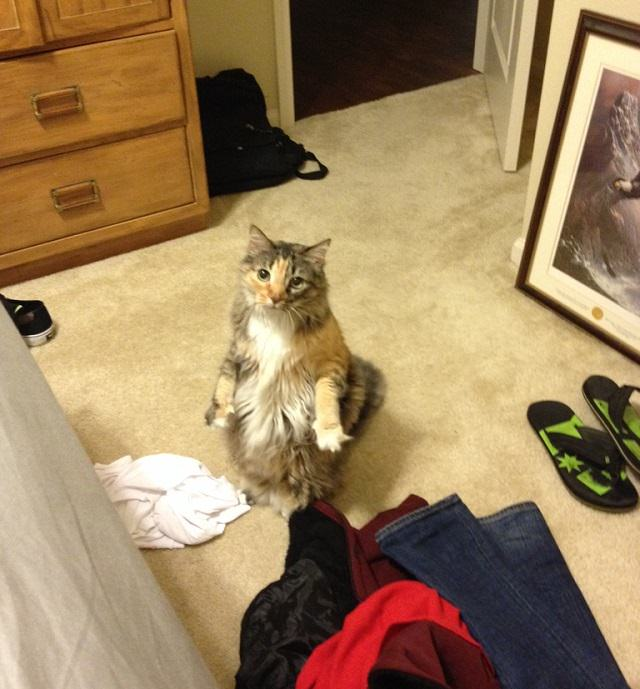 Stand_up_Cat (1)