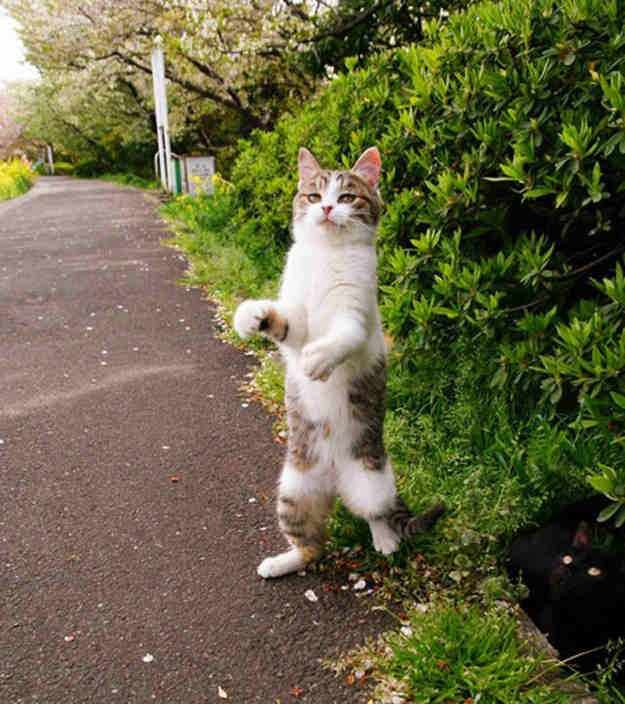 Stand_up_Cat (10)
