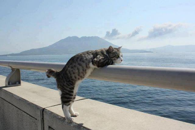Stand_up_Cat (15)