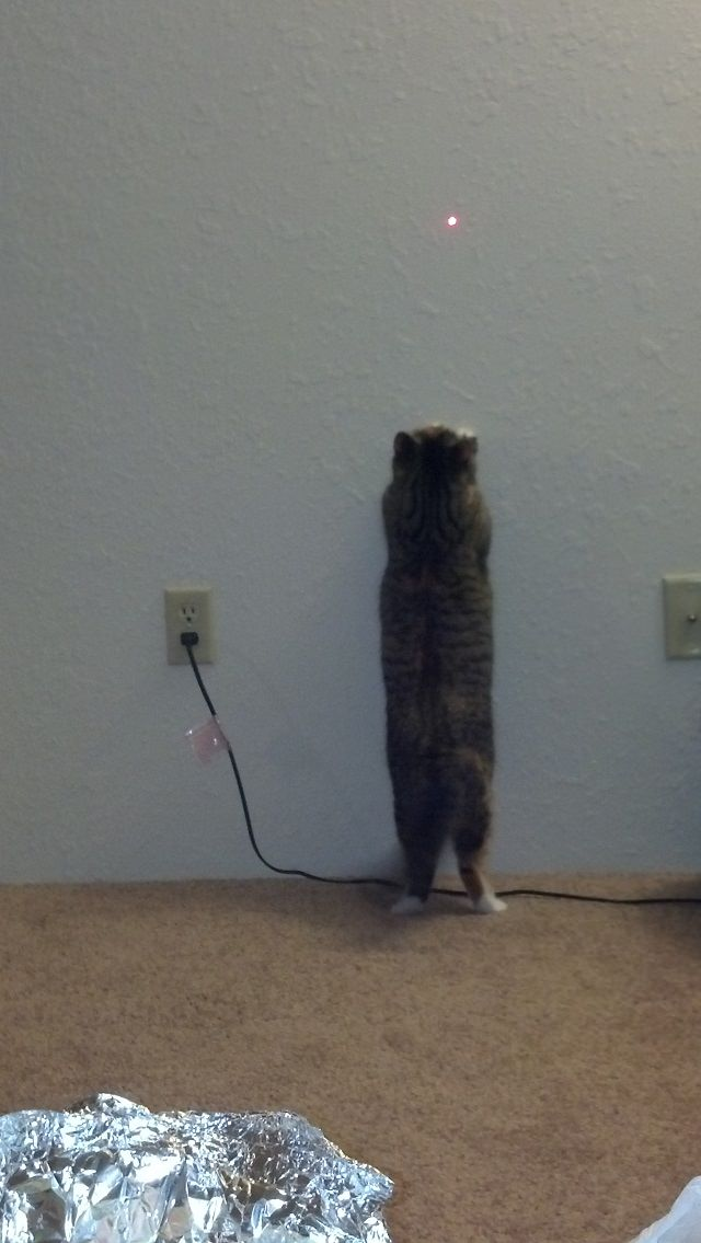 Stand_up_Cat (19)
