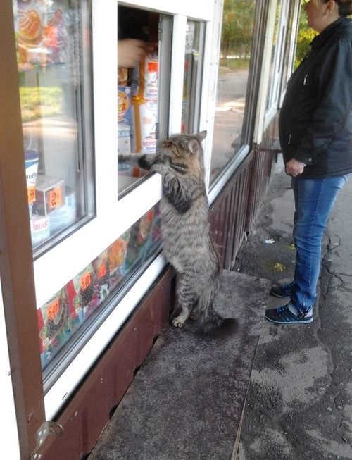 Stand_up_Cat (21)