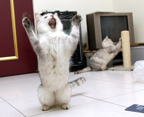 Stand_up_Cat (3)