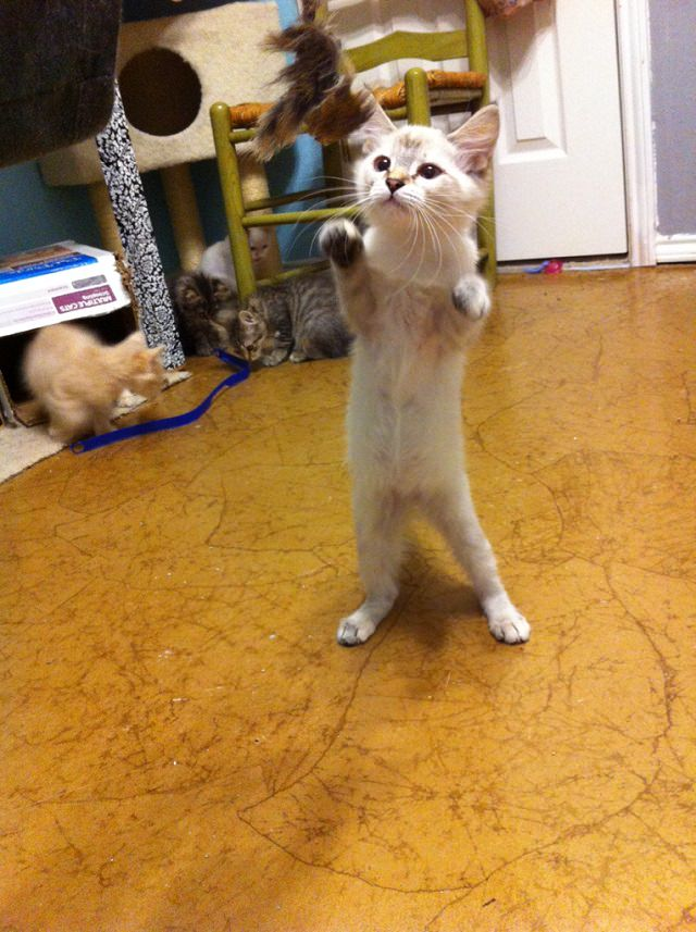 Stand_up_Cat (4)