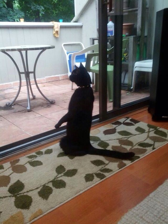Stand_up_Cat (7)