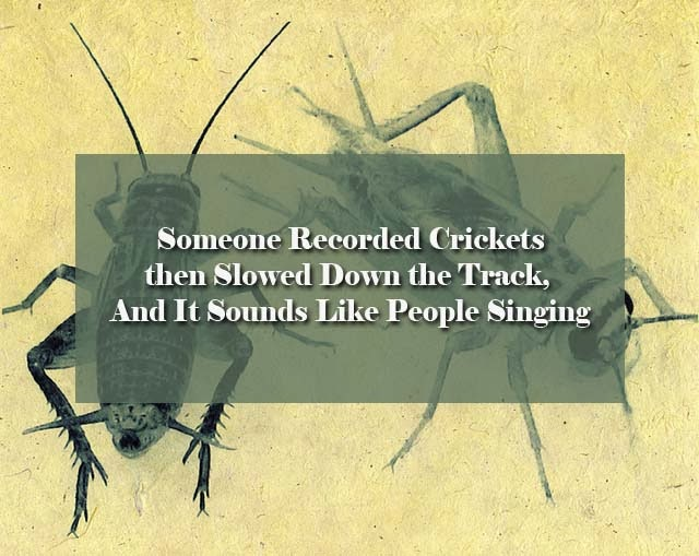 crickets_sound