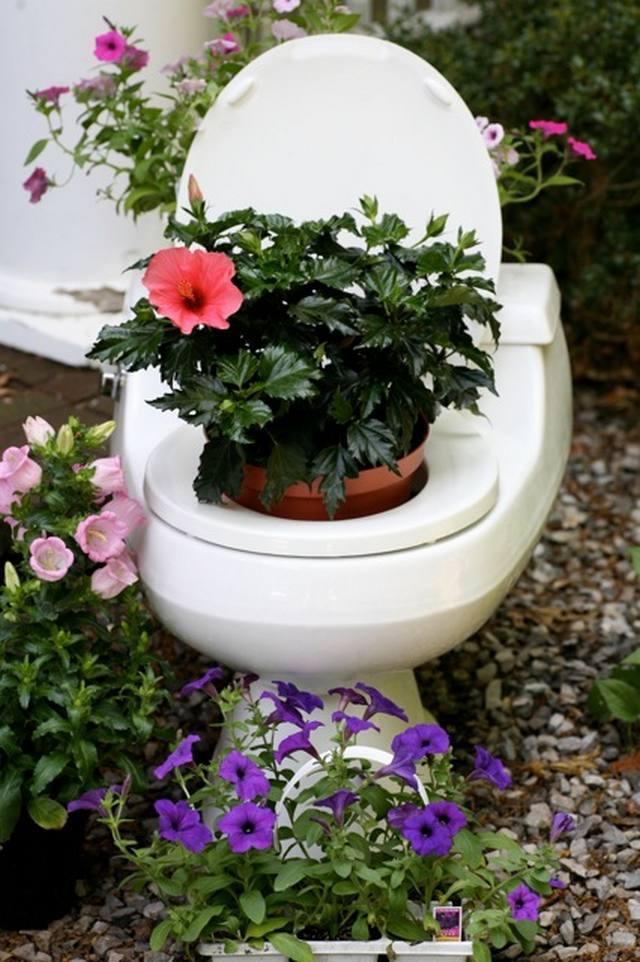 Flowers In The Toilet Pickchur