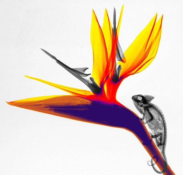 x-ray_nature (12)