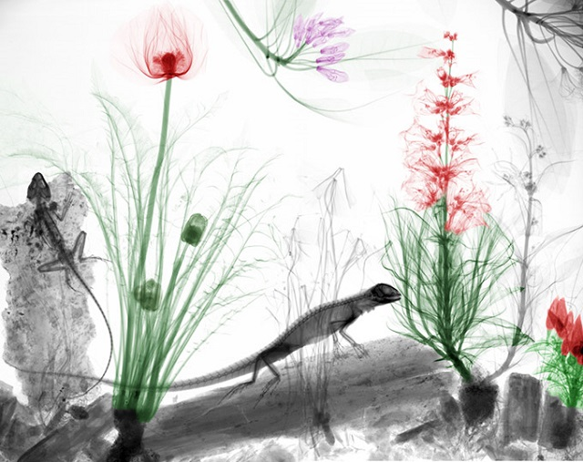 x-ray_nature (13)