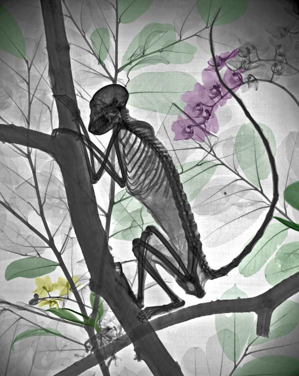 x-ray_nature (4)