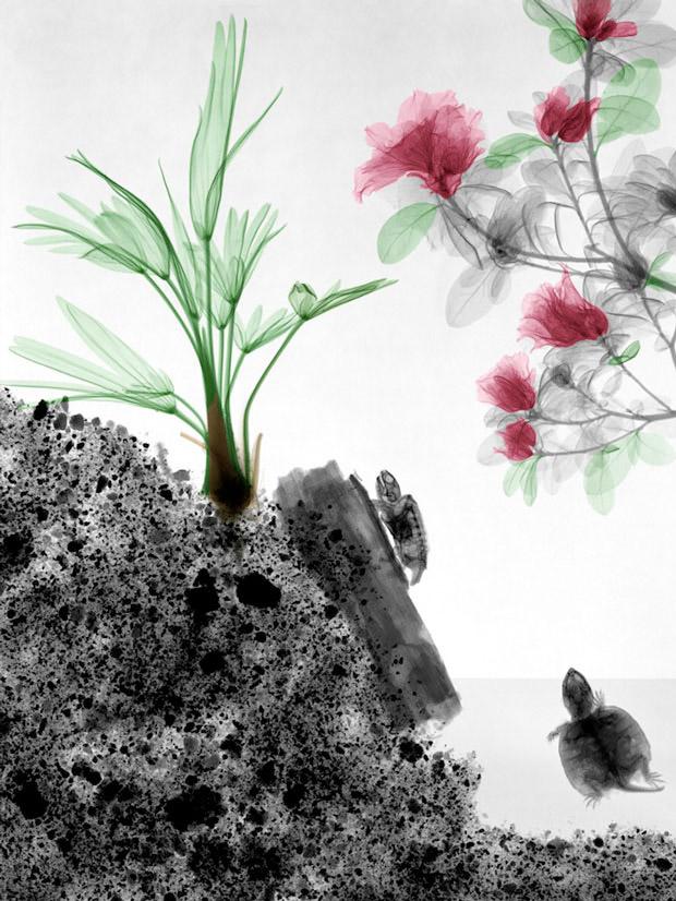 x-ray_nature (5)
