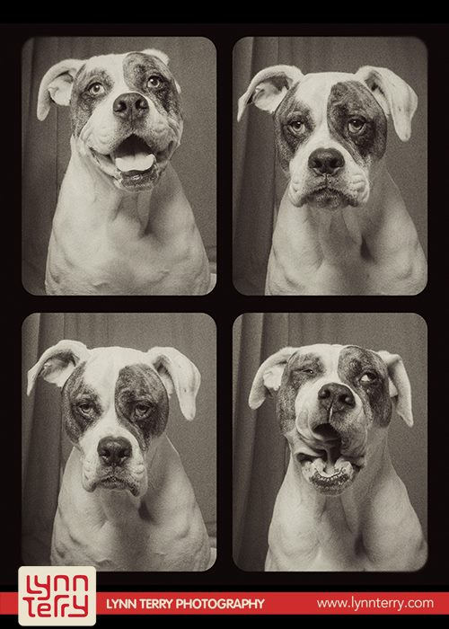 dogs_in_photo_booth (1)