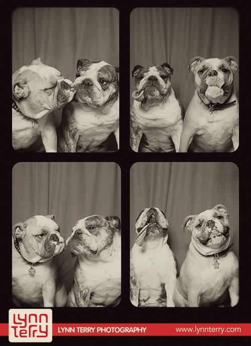 dogs_in_photo_booth (2)