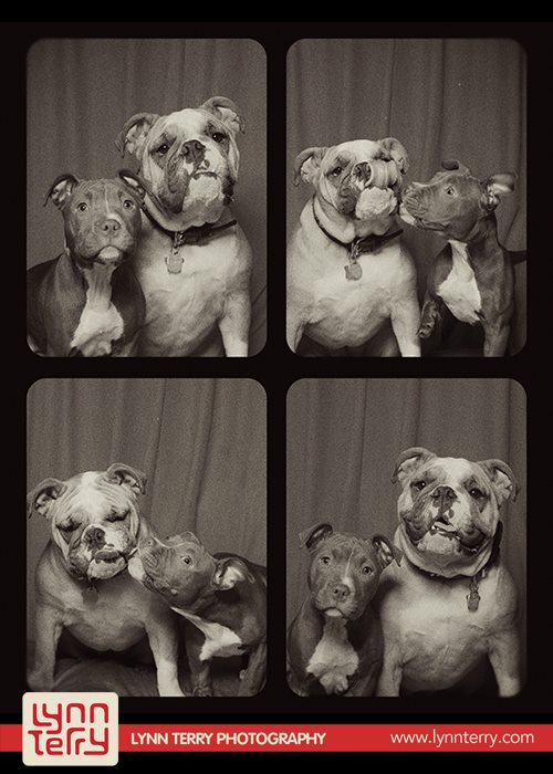 dogs_in_photo_booth (6)