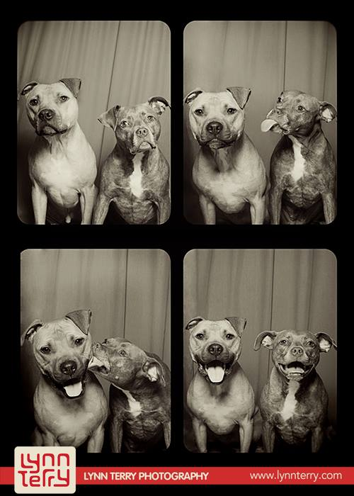 dogs_in_photo_booth (9)