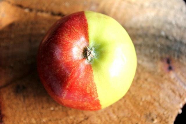 mutant_apple_3