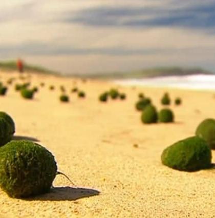 green living balls (1)