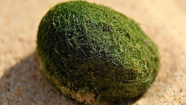 green living balls (4)