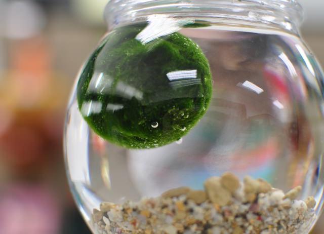 green living balls (5)