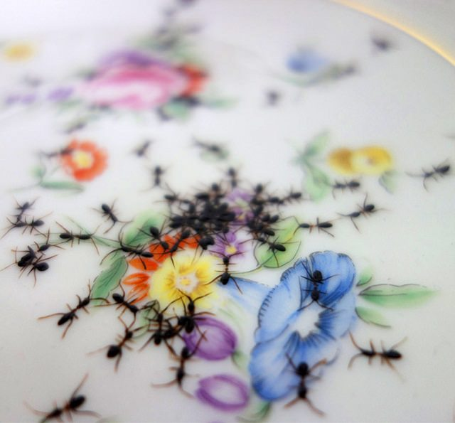 hand-painted ants (3)
