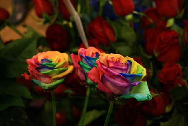 How To Grow A Rainbow Rose Naturally