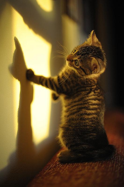 cat-reflection