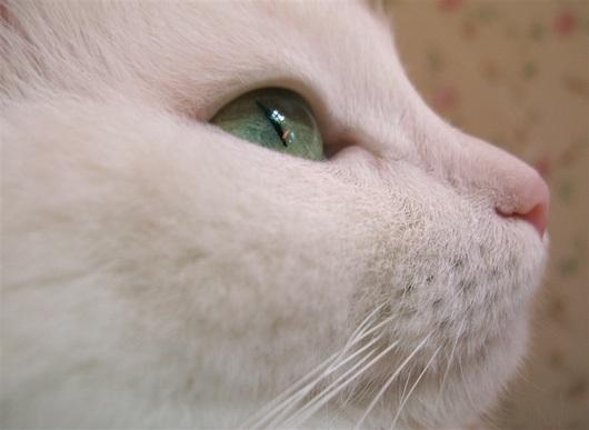 cat-side-face