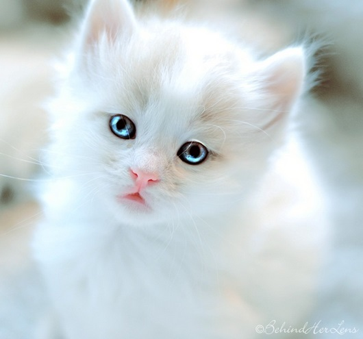 expression-cat