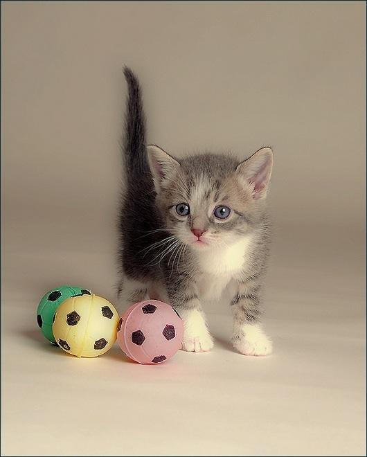 play-cat