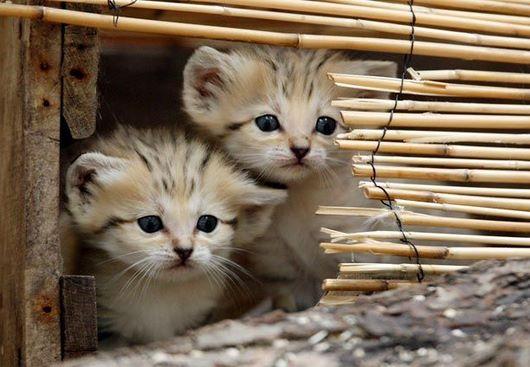 sisters-cat